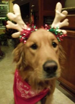 Christmas Shiner - 2010