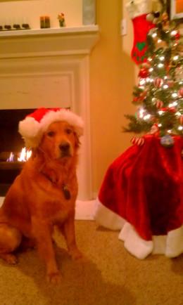 Christmas Shiner - 2011