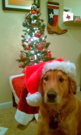 Santa Shiner - 2011