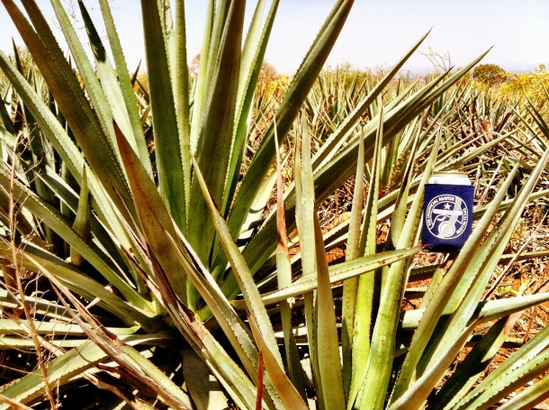 22f - Dulce Vida Organic Tequila Distillery Trip - Guadalajara & Mazamitla, Mexico - May 1-3, 2013